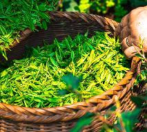 Jak parzyć herbatę, aby wydobyć z niej pobudzające i orzeźwiające właściwości?