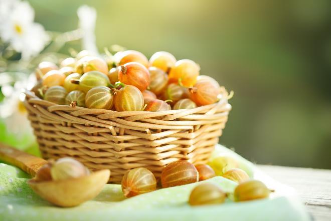 Agrest - właściwości owoców agrestu i ich  zastosowania w kuchni