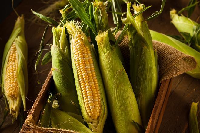 Kukurydza: właściwości i wartość odżywcza zboża bez glutenu